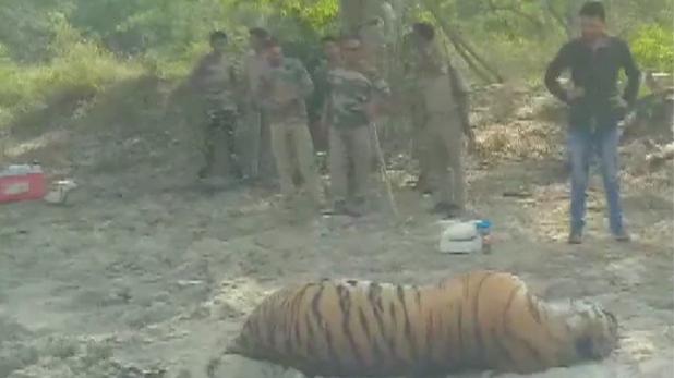 Jim Corbett national park tiger death, जिम कॉर्बेट नेशनल पार्क में टाइगर की रहस्यमयी मौत, जांच में जुटा फॉरेस्ट विभाग