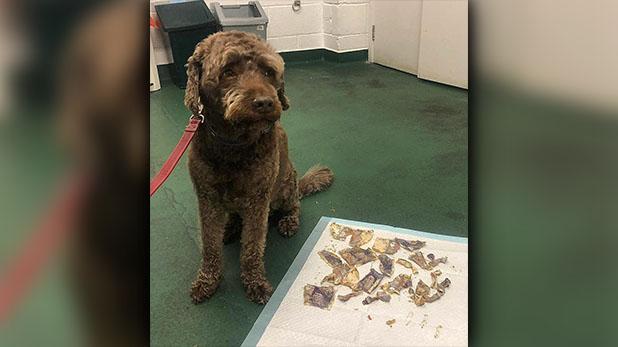 dog, कुत्ते ने खाए 14,500 रुपए के नोट, इलाज में खर्च हुई इतनी रकम