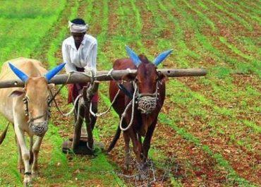 किसान को लागत नहीं मिलती, फिर भी राशन महंगा, समझें बिचौलियों का खेल