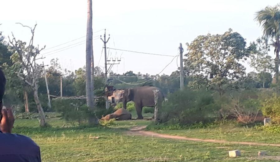 elephant dies after electric shock, आंध्र प्रदेश में बिजली का करंट लगने से वयस्क हाथी की मौत