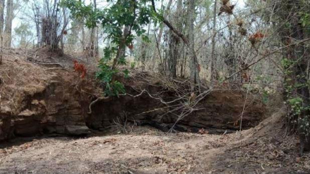 नरकंकाल, जंगल में बकरी चराने गईं महिलाओं को दिखा नरकंकाल, इलाके में दहशत का माहौल