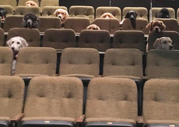 फिल्म, जब कुत्तों ने थियेटर में बैठकर देखी फिल्म, वायरल हो गईं फोटोज