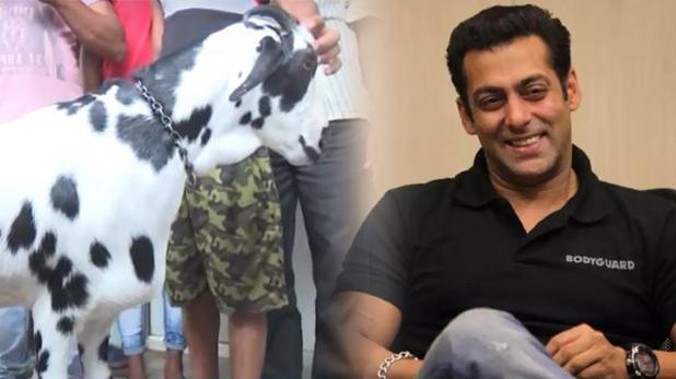 EID Goat Named Salman, ईद पर 8 लाख रुपये में बिका सलमान खान नाम का बकरा, जानिए क्यों है इतना खास