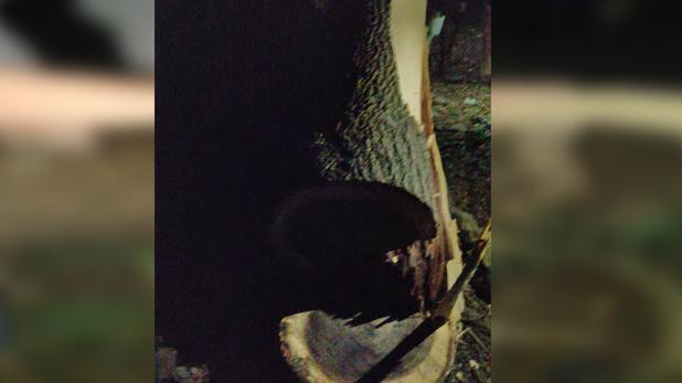 आरे, मुंबई: आरे में पेड़ कटने के खिलाफ सड़क पर उतरे लोग, मेट्रो साइट पर किया विरोध प्रदर्शन