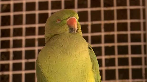 Air Pollution, दिल्ली की बिगड़ती हवा से पशु-पक्षी भी परेशान, हो रहीं जानलेवा बीमारियां