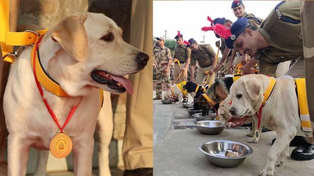 cisf organises retirement ceremony for 7 dogs, कुत्तों की भव्य रिटायरमेंट पार्टी, गोल्ड मेडल और प्रशस्ति पत्र देकर फ़ोर्स से किया विदा