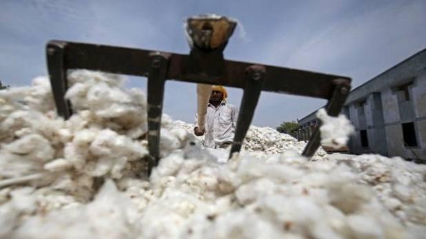 Pakistan Cotton trade, भारत से पंगा लेना पाकिस्तान को पड़ा भारी, अमेरिका-ब्राजील से खरीदना पड़ रहा है महंगा कॉटन