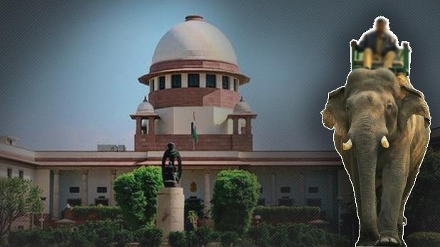 Mahout moves Supreme Court, अपनी हथिनी को छुड़ाने सुप्रीम कोर्ट पहुंचा महावत, बोला- मेरी फैमिली जैसी है!