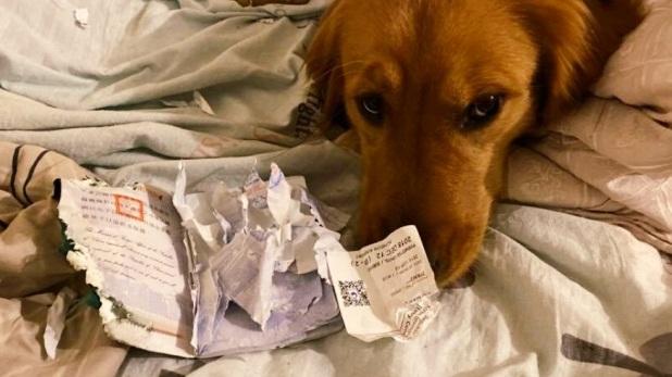 Coronavirus Woman Passport Torn by Dog, कुत्ते ने कर डाले पासपोर्ट के टुकड़े-टुकड़े, अब शुक्रिया अदा करते नहीं थक रही महिला