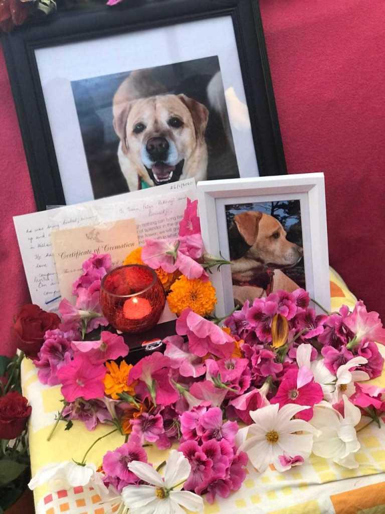 dog died in New Zealand, न्यूजीलैंड से गया आकर किया कुत्ते का पिंडदान, गंगा में विसर्जित कीं अस्थियां