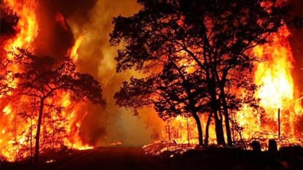 forests Uttarakhand viral, क्या भीषण आग की लपटों से धधक रहे हैं उत्तराखंड के जंगल? मुख्यमंत्री ने खुद बताई सच्चाई