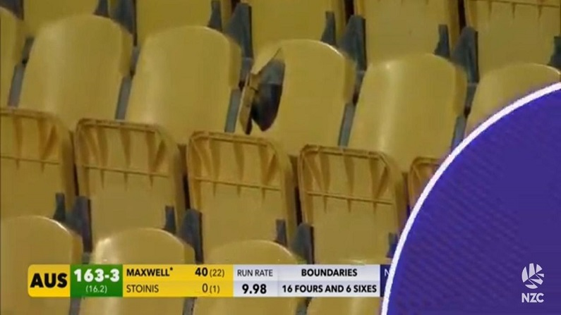 glenn maxwell 31 ball 70 run in Wellington t20 new zealand vs australia